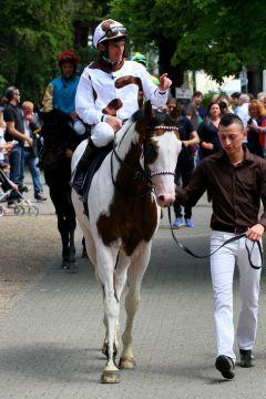 Silvery Moon mit Champion-Jockey Andrasch Starke nach seinem 2. Platz beim Deutschland-Debut in Köln. www.galoppfoto.de - Sandra Scherning