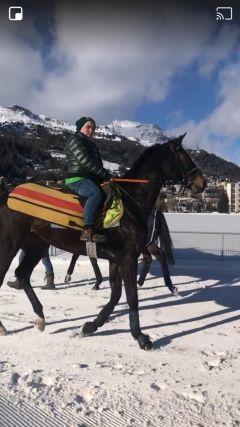 """Gut trainiert: Hout Bay am Tag vor dem """"Grand Prix"""" mit Mario Hofer im Sattel. Foto: privat"""