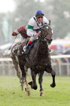 Kamsin lässt sich auch vom Regen nicht stören ... Derbysieger 2008.www.galoppfoto.de