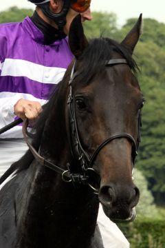 Codoor bei der Henkel-Trophy 2010. Foto Sandra Scherning