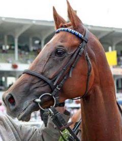 Irini nach dem Erfolg im Hanshin-Cup 2010 in Hamburg-Horn, dem der Gr. III-Erfolg in Mailand folgte. www.galoppfoto.de