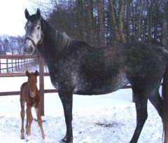 Macuna als stolze Mutter mit ihrem 1. Fohlen 2010 (H. v. Hurricance Run). Foto: Gestüt Hachetal/privat
