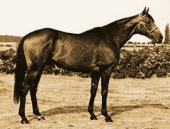 Star Appeal im National Stud. Foto Archiv
