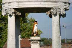 Tattersalls-Fuchs. Foto offiziell