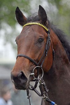 Win for Sure 2008. www.galoppfoto.de