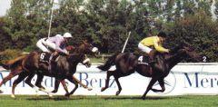 Turfkönig beim Bayerischen Zuchtrennen 1990. Foto Archiv Zeno