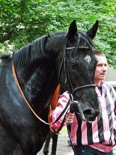 Traumprinz nach seinem Sieg am 10.06.2012 in Köln. Foto Karina Strübbe