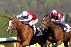 Acadius gewinnt unter Andreas Suborics in Düsseldorf - jetzt gilt das Französische Derby als  Ziel. www.duesseldorf-galopp.de - Tuchel