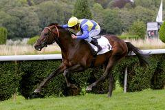 Alianthus 2011: 4 Starts - 4 Siege, eine märchenhafte Bilanz! www.duesseldorf-galopp.de - Tuchel.jpg