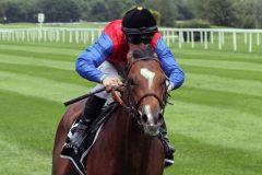 Alson gewinnt trotz Wegbrechens im Stil eines guten Pferdes. www.galoppfoto.de - WiebkeArt
