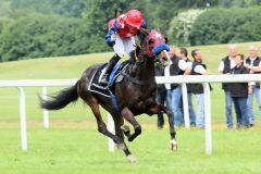 Amiro probt erfolgreich für das Derby. www.galoppfoto.de - WiebkeArt