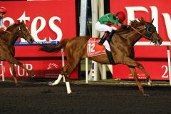 Animal Kingdom mit Joel Rosario gewinnt den Dubai World Cup. www.galoppfoto.de - Frank Sorge