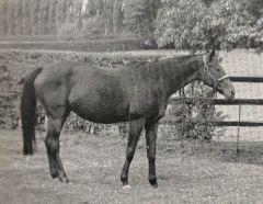 Asterblüte  (GER) 1946