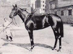 Asterblüte v. Pharis - Aster, Siegerin im Deutschen Derby, Preis der Diana, Schwarzgold-Rennen und Union-Rennen. Foto Archiv