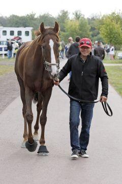 Besitzertrainer Marc Timpelan mit Torqueville. ©galoppfoto - Sabine Brose
