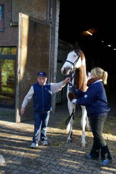 Silvery Moon am 22. November 2012 im Hofer-Stall mit Trainer Mario Hofer und Betreuerin Cati Benken. www.dequia.de - Frauke Delius