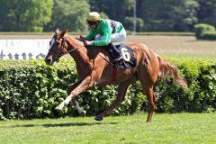 Fünf Längen liegen zwischen Chantilly und Andrasch Starke zu der Konkurrenz in Hoppegarten. www.galoppfoto.de - Sabine Brose