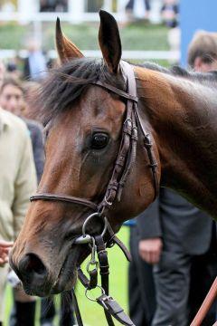 Charm Spirit wird nach seinem Sieg in den Queen Elizabeth Stakes in Ascot Deckhengst. www.galoppfoto.de - Sandra Scherning