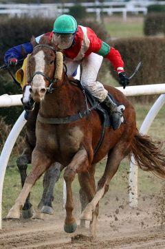 Crises Averted in Aktion als Rennpferd beim Sieg mit Laura Giesgen am 24.02.2015 in Neuss. www.klatuso.com