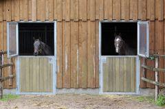 Daily Mail (links) und Dashing Blade schauen aus ihren Boxen heraus. www.galoppfoto.de - Frank Sorge