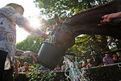 Das tut gut bei so einer Hitze ... Simba nach seinem Listensieg in Hoppegartener Sommerpreis. www.galoppfoto.de - Marius Schwarz