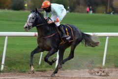 Der erste Sieger der Sandbahn-Saison 20/21: Alpha Taurus mit Niazi Ismail. www.galoppfoto.de - Stephanie Gruttmann