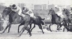 Alarich gewinnt das Derby vor Kaiseradler und Wiener Walzer. Foto Archiv