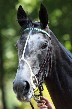 Die Siegerin vom Großen Preis von Baden, Gr. I, im Porträt. www.galoppfoto.de
