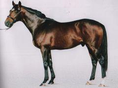Stallion Doyen. Foto Darley
