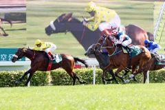 Dunaden mit Craig Williams als Sieger der Cathay Pacific Hong Kong Vase. www.galoppfoto.de