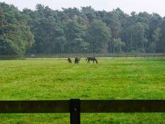 Ebbesloh - Pferde auf den Koppeln. Foto: Karina Strübbe