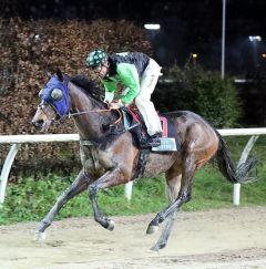 Edelstein gewinnt am 1.1.2018 in Neuss - Foto: Dr. Jens Fuchs