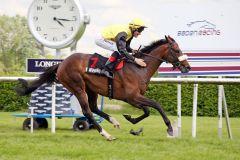 Ein Derby-Trial-Sieger (noch) ohne Derby-Nennung: Secessio mit Alexander Pietsch. www.galoppfoto.de