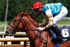 Die Röttgener Farben sind im Zweijährigen-Rennen vorne: Elora Princess siegt unter Stephen Hellyn. www.pferde-gtm.de