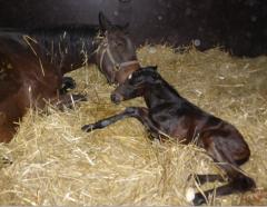 Past Twelve begrüßt ihr gerade geborenes Hengstfohlen von Dabirsim. Foto: privat