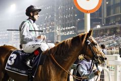 Für Girolamo mit Andrasch Starke sprang in Dubai Sheema Classic nur ein 8. Platz heraus. www.galoppfoto.de - Frank Sorge