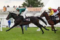 Erster Sieg, acht Tage vor dem Derby-Start: Buzzy mit Milos Milojevic gewinnt. www.galoppfoto.de - Sabine Brose