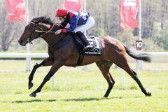 Hawk gewinnt bei seinem ersten Start im Handgalopp. www.galoppfotoo.de - Sabine Brose