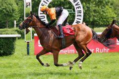 Heart Storm gewinnt mit Eva-Maria Zwingelstein am 21.05.2016 in Mülheim (Foto: Dr. Jens Fuchs)