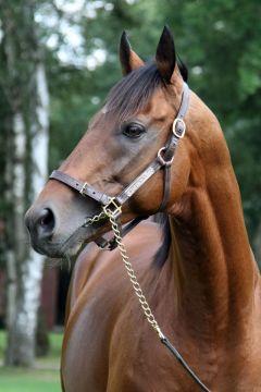 Campanologist - der neue Stallion im Gestüt Fährhof. www.galoppfoto.de - Frank Sorge