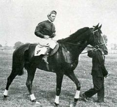 Dadji (Asterus - Perle d'Orient), http://www.sporthorse-data.com