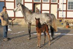 Audrey mit ihrem 2012 geborenen Hengstfohlen von Lando. Foto: Egon Knof