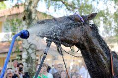 Eine kalte Dusche für die Siegerin ... www.galoppfoto.de