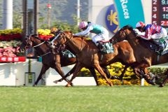 Innen auf der Siegerspur in der Cathay Pacific Hong Kong Mile ist Able One mit Jeff Lloyd. www.galoppfoto.de