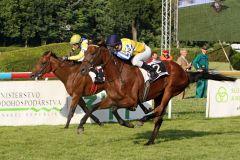 Innovator mit Martin Srnec gewinnt das 18. Slovenske Derby. www.galoppfoto.de