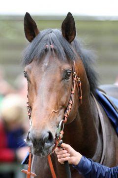 It's Gino ist jetzt Stallion im Union-Gestüt. www.galoppfoto.de