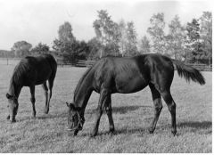 Windstille mit Windrose (v. Neckar) im Gestüt Ravensberg. Foto: Archiv Gestüt Ravensberg