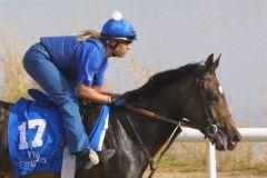 Kazzia im Galopp bei der Morgenarbeit 2002 für Godolphin in Dubai. www.galoppfoto.de - Frank Sorge