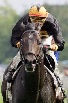 König Turf - hier als Sieger im Jaxx-Pokal 2007 mit Torsten Mundry - deckte in der vergangenen Saison in Frankreich 79 Stuten. www.galoppfoto.de