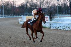 Kommt nach dem RaceBets.com-Championspreis, Agl. II, am letzten Renntag des Jahres 2014 in Dortmund als Sieger zurück: Königsadler mit Rene Piechulek. Foto: Dr. Jens Fuchs
